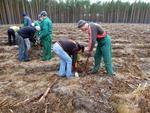 Bezrobotni z Czarnkowa będą pracować w lesie